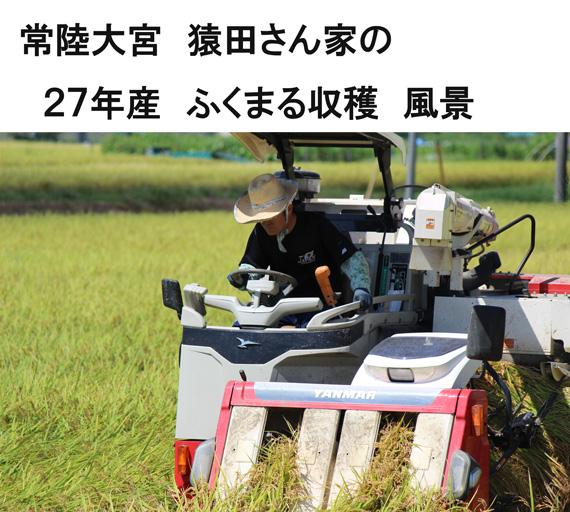 ふくまる収穫風景